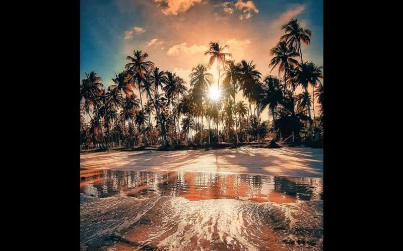 A imgagem da foto poesia Coqueiros doidos traz o cenário de uma praia tropica. Em primeiro plano, o mar manso e alaranjado, quebra em ondas suaves, formando uma renda delicadas com a branca espuma. O sol está se pondo e a silhuetas do coqueiral bem próximo ao mar, tem brilho e intensidade.