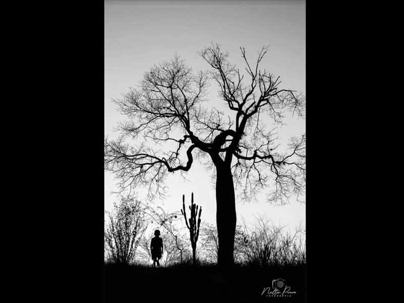 A silhueta de um menino ao lado das silhuetas de um catus mandacaru e de uma árvore conhecida como barriguda, totalmente sem fohas e de galhos secos é a imagem de O menino graveto - foto poesia para começar bem o dia