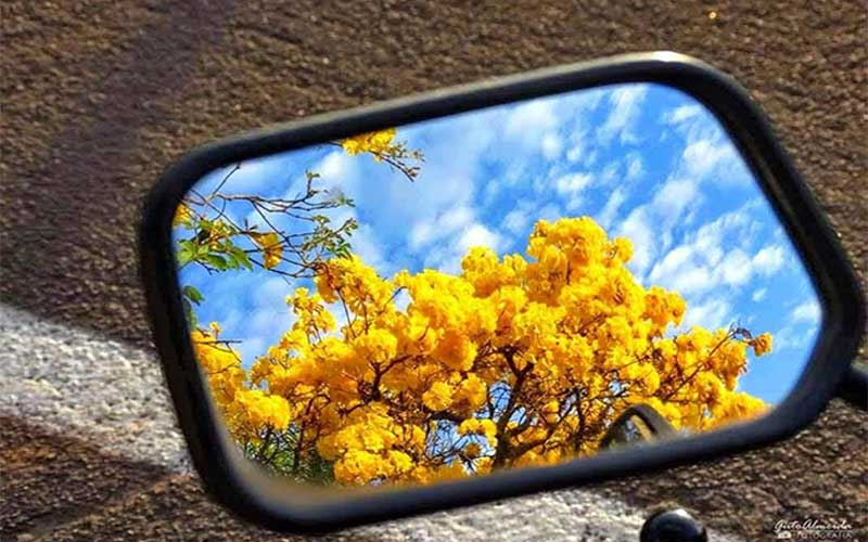 No espelho retrovisor de um carro vê-se um ipê bem florido de intenso amarelo. O céu bem azul, traz nuvens brancas, cujo formato esgarçado e comprido indica que o carro está em movimento.